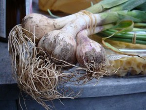 чеснок, garlic