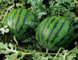 арбуз, watermelon