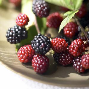 малина, raspberries
