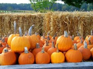 тыква, pumpkin