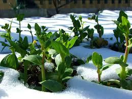 winter garden, сад зимой
