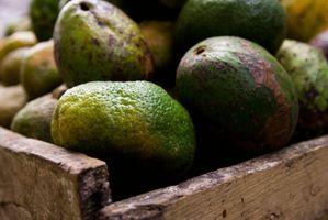 avocado, авокадо