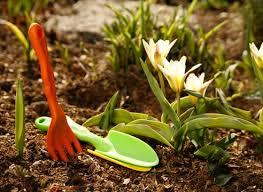 spring garden, весенний сад