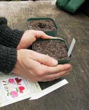seeds, семена