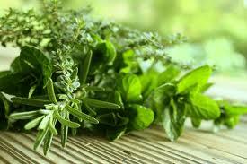 herbs, травы